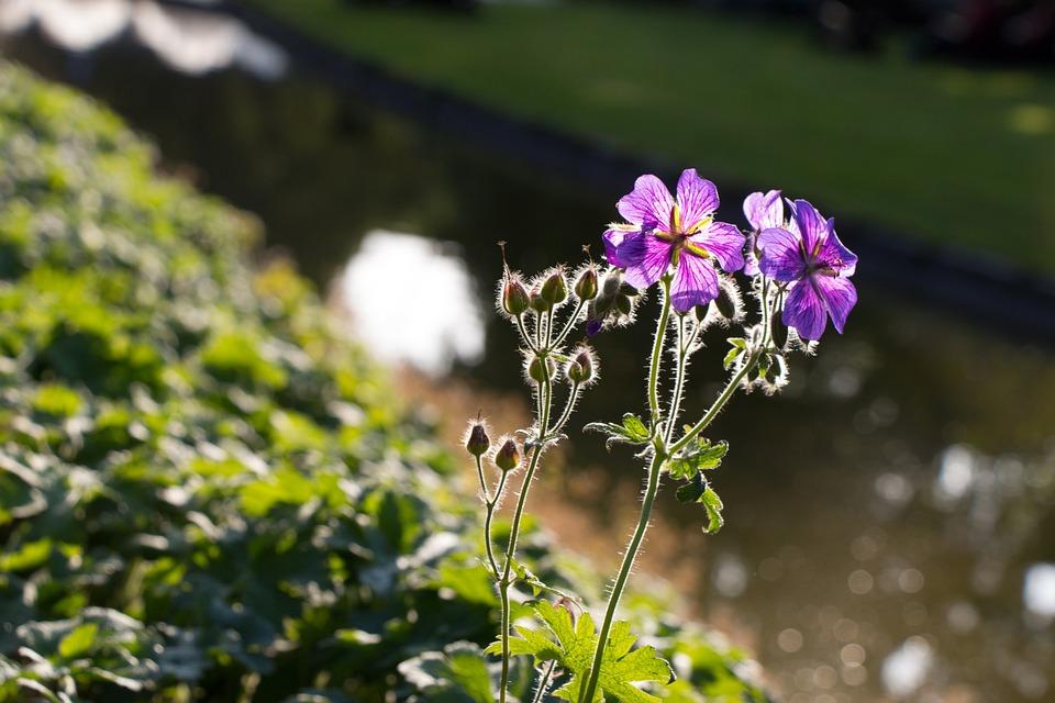 Flower, Nature, Beautiful Flower, Nature Flower