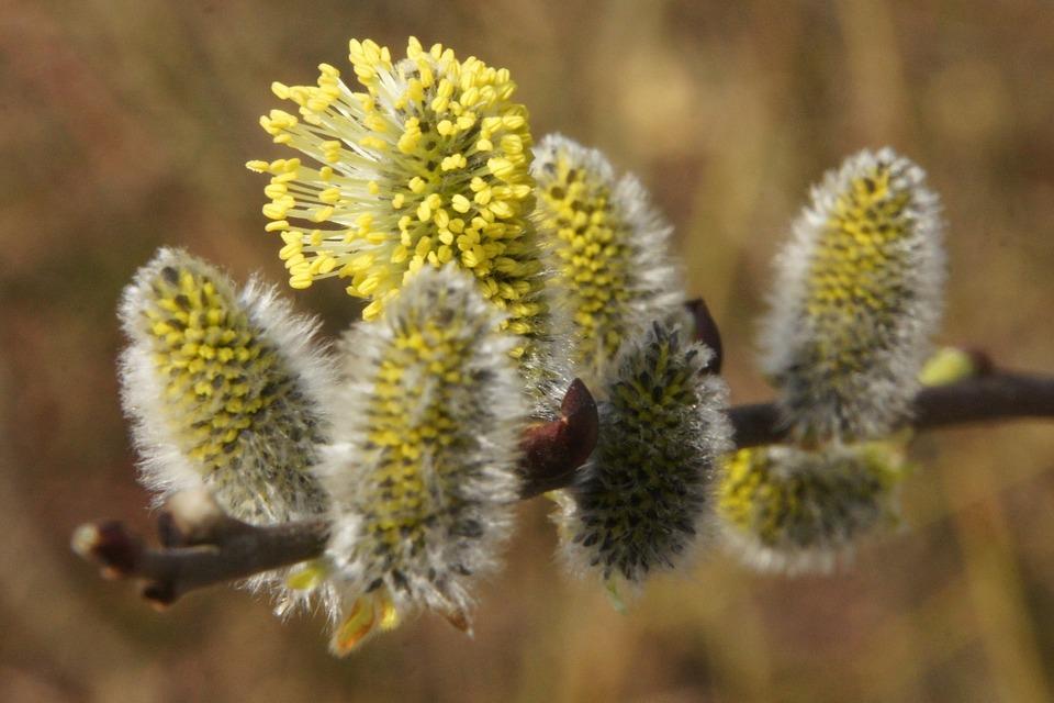 Nature, Plant, Flower, Close Up, Flowers