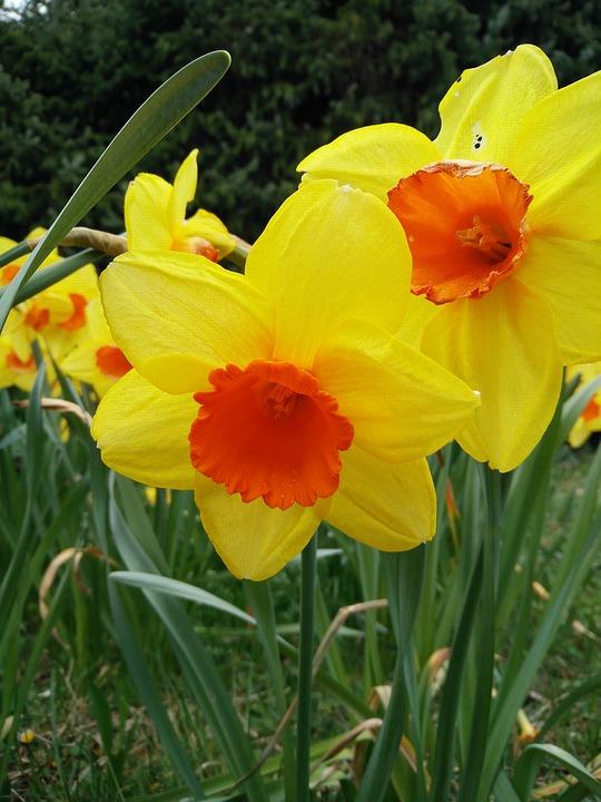 Flower, Plant, Nature, Garden