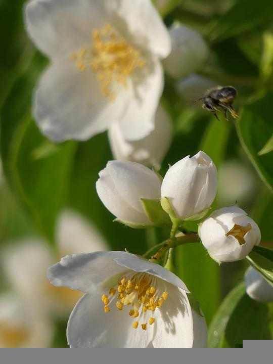 Flower, Nature, Honeybee, Fly, Insect, Plant