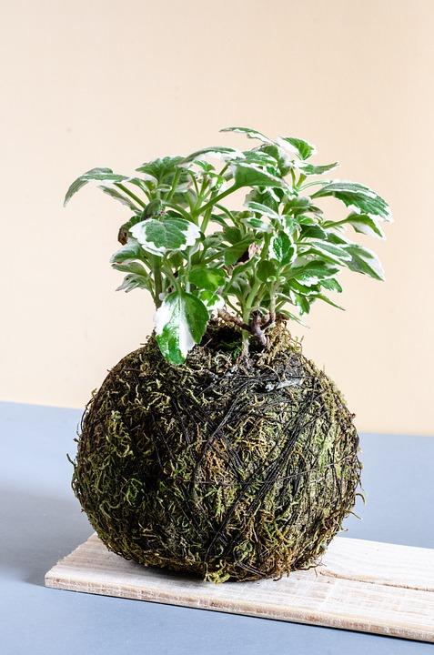Kokedama, Plants, Nature, Green, Flowers, Flower, Flora