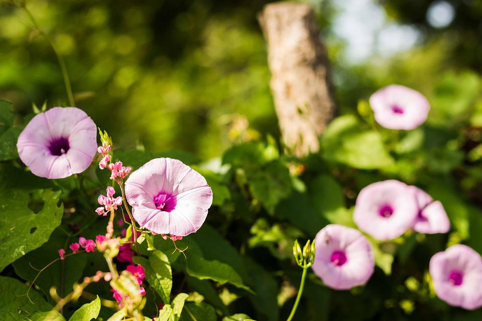Flower, Plant, Nature, Leaf, Petal