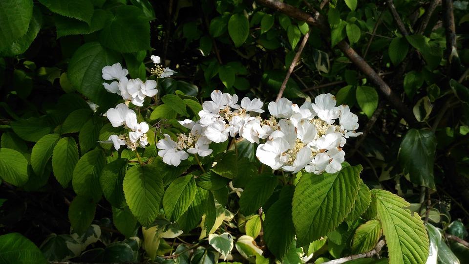 Flower, Flora, Nature, Leaf, Garden, Petal, Season