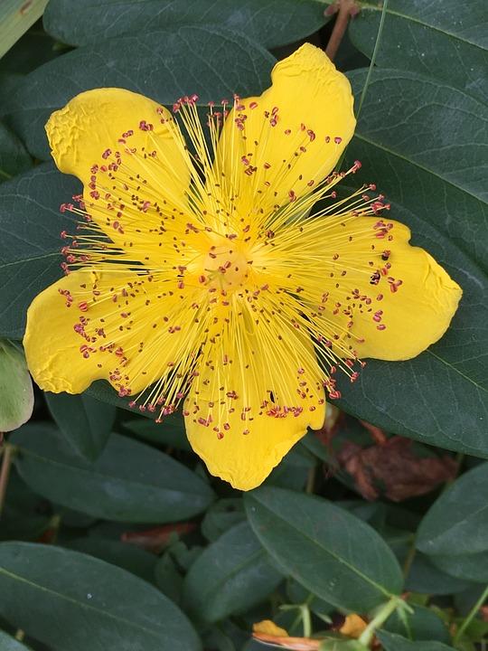 Nature, Flora, Leaf, Outdoors, Summer, Garden, Flower