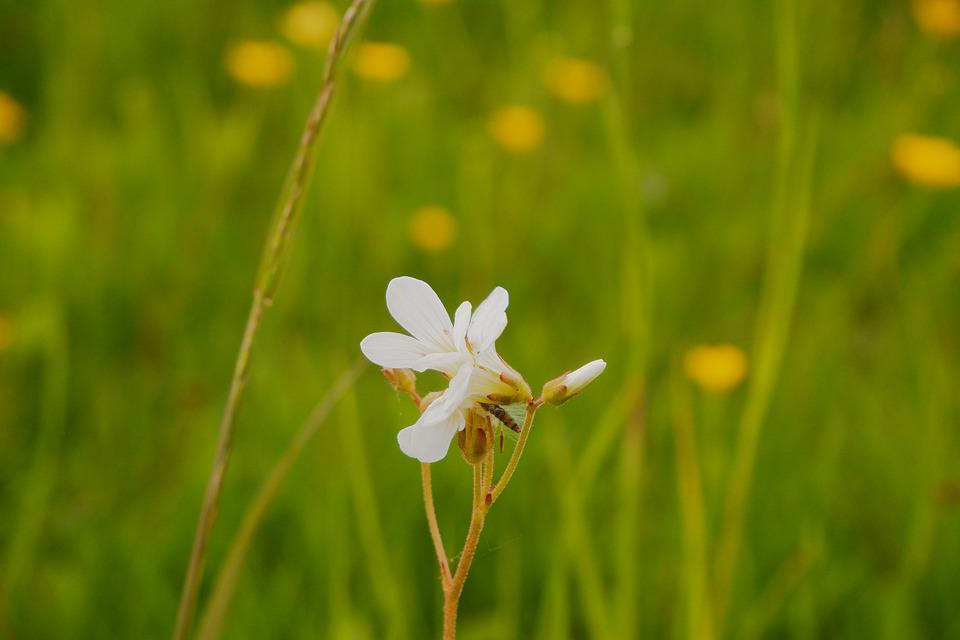 Flower, Meadow, Nature, Plant, Blossom, Bloom