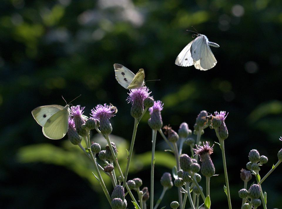 Butterflies, Flight, Flower, Insect, Wing, Nature, Nice