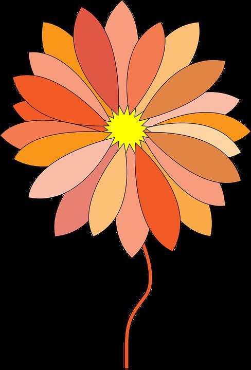 Flower, Orange, Nature