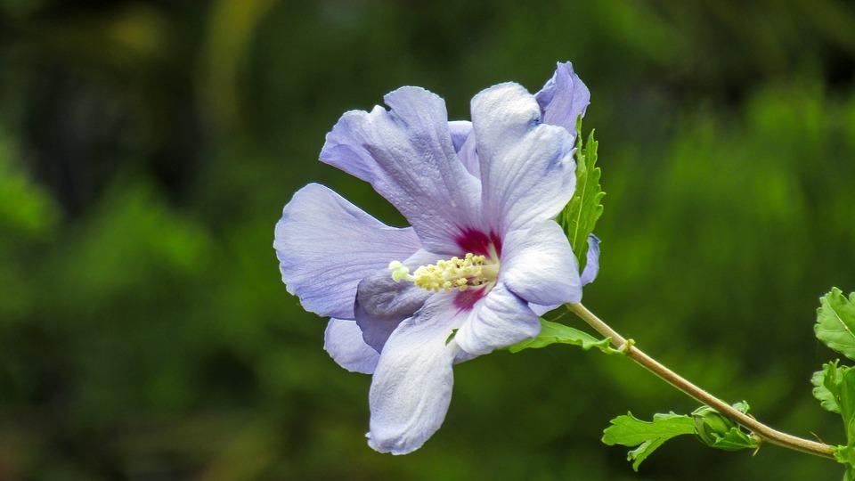 Flower, Nature, Flower Wasp, Hibiscus, Petal, Garden
