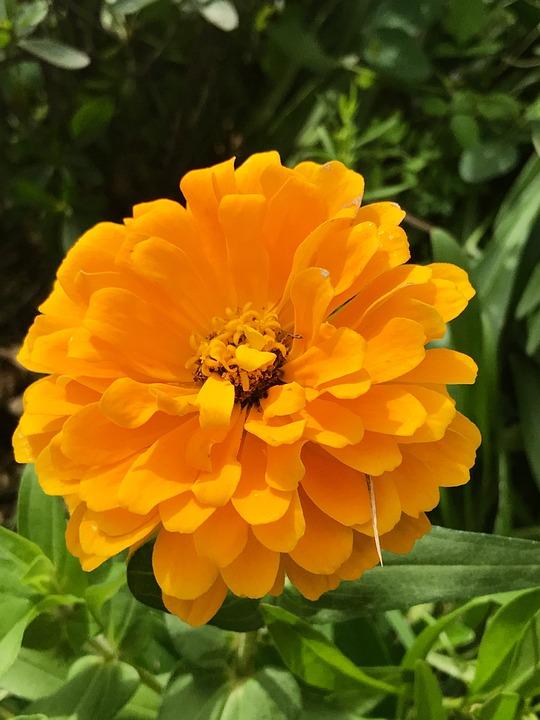Flower, Plant, Pollen, Petal, Garden, Nature, No Person