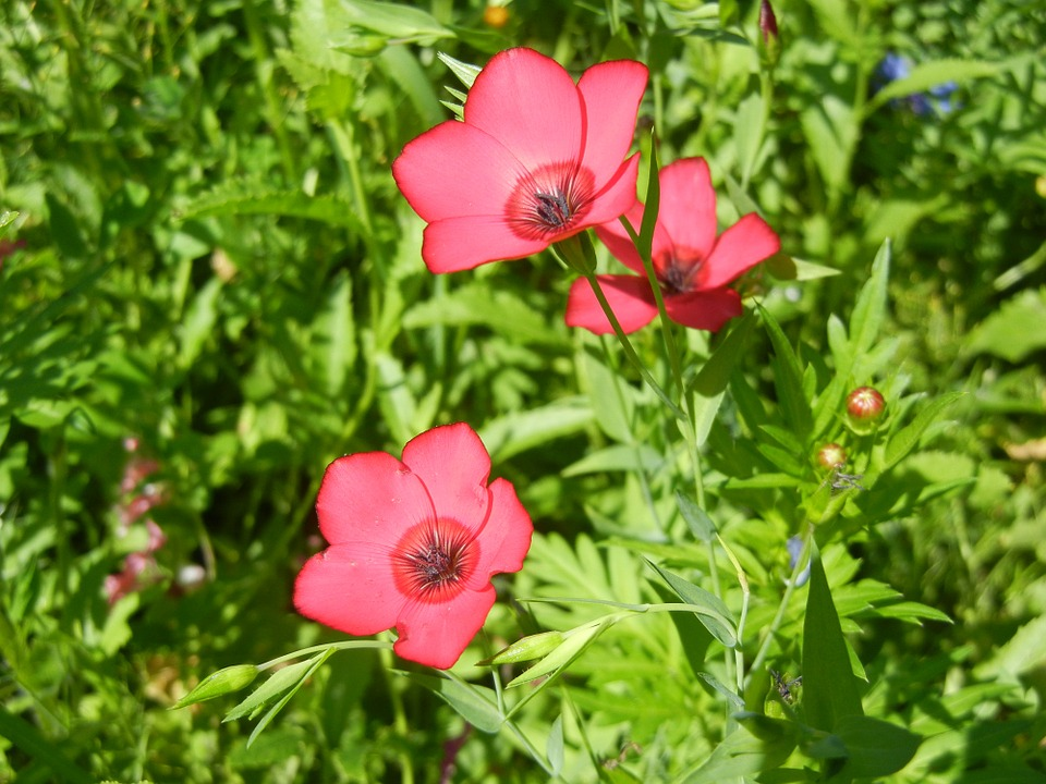 Flower, Pink Flower, Nature