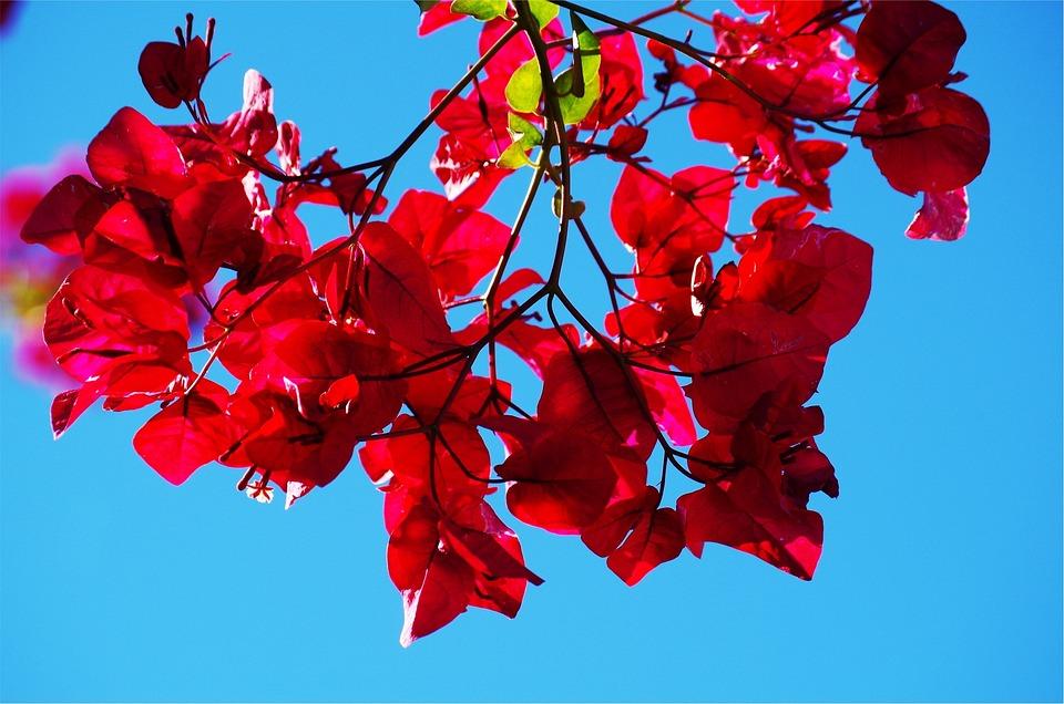 Nature, Flower, Plant, Season, Branch