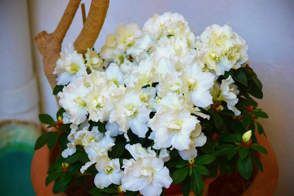Flower, Floral, Nature, Plant