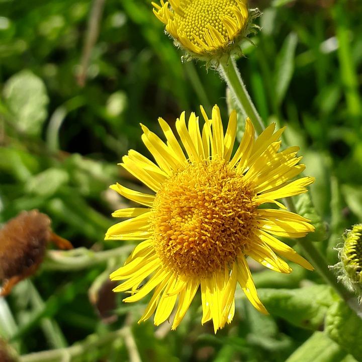 Nature, Plant, Flower, Summer, Floral, Close Up