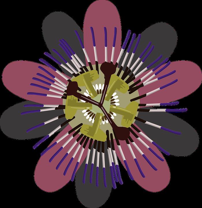 Flower, Purple, Clip Art, Purple Flower, Nature, Garden
