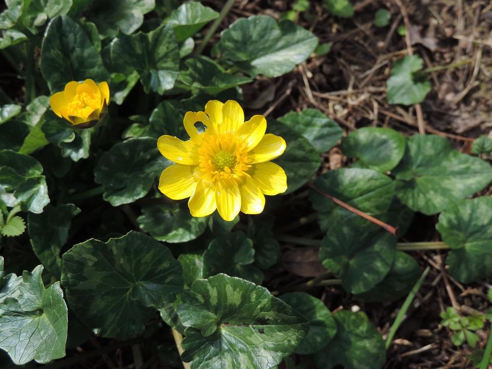 Flower, Yellow, Nature, Spring, Petals