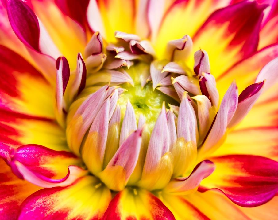 Flower, Stamp, Blossom, Bloom, Plant, Garden, Nature