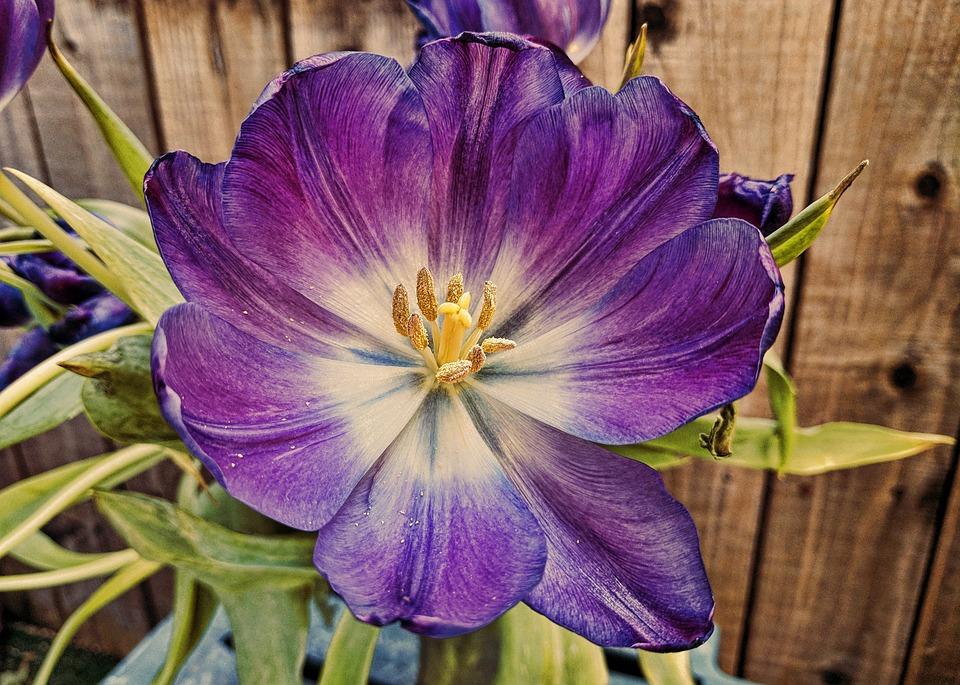 Flower, Nature, Flora, Color, Garden, Summer, Petal