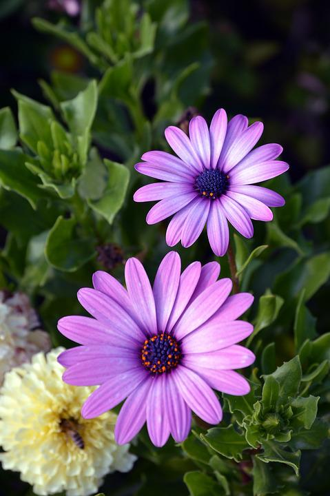 Flower, Flora, Summer, Nature, Garden, Blooming, Floral