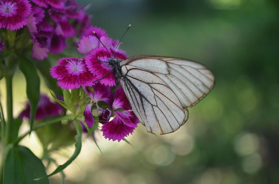 Butterfly, Flower, Nature, Summer, Garden, Beautiful