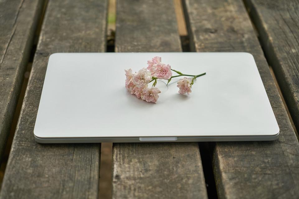 Technology, Computer, Keyboard, Flower, Nature, Work