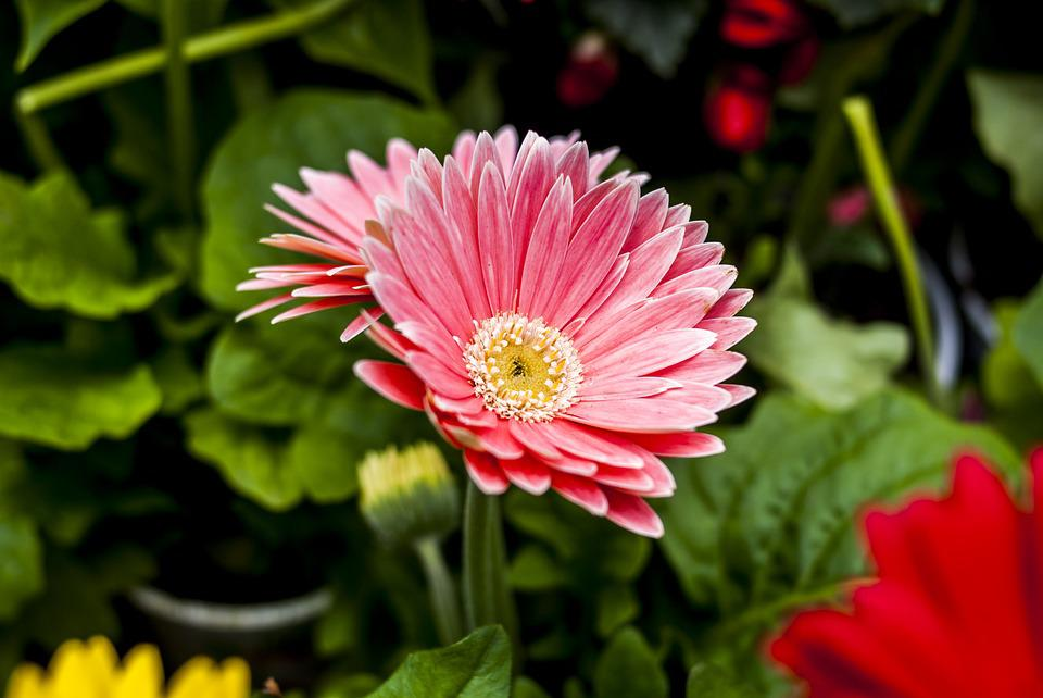 The Most Beautiful Flower, Flower, Nature, Plant