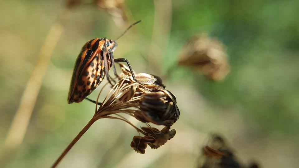 Macro, Animal, Nature, Insect, Wildlife, Flower