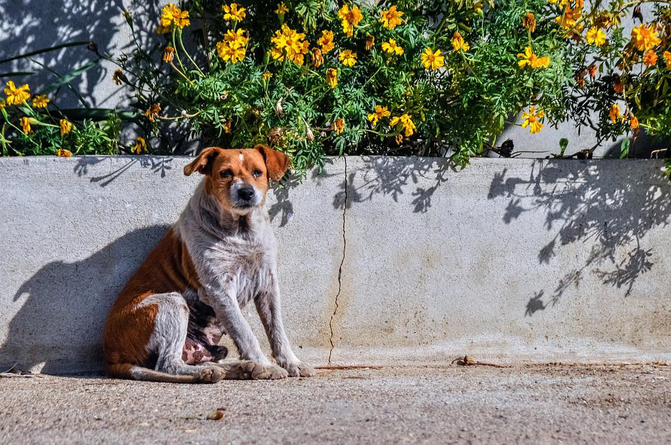 Dog, Shadow, Old, Flowers, Pet, Animal, Nature, Doggy