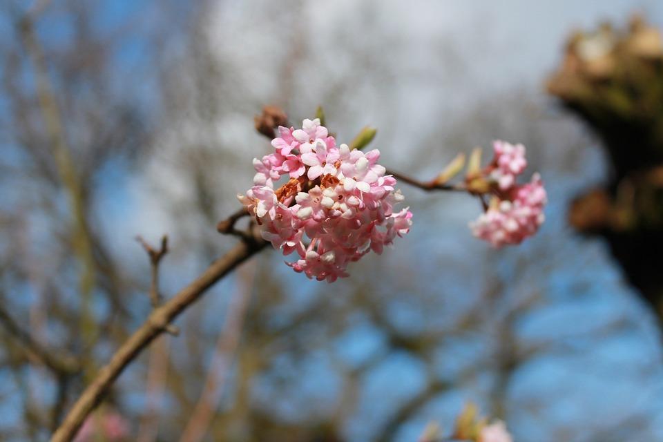 Flowers, Blossom, Spring, Blossom Buds, Nature