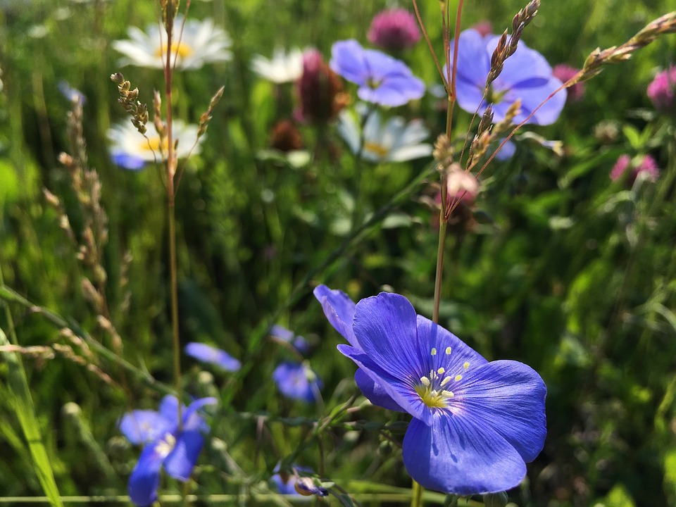 Free photo nature flowers blue flower floral green summer max pixel summer flowers blue flower nature green floral mightylinksfo