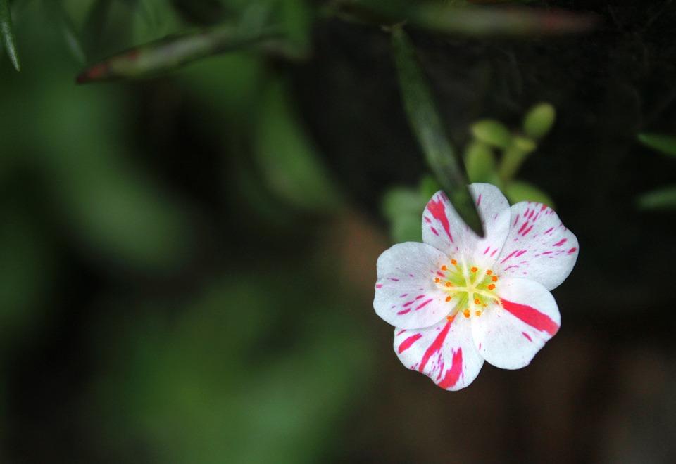 Flowers, Plant, Portrait, Nature, Blossom, Fireworks
