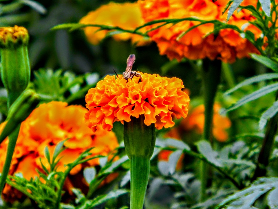 Nature, Flowers, Flora