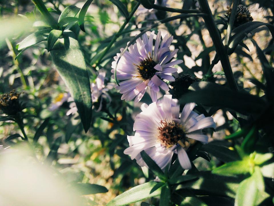 Flower, Summer, Purple, Flower Bed, Nature, Flowers