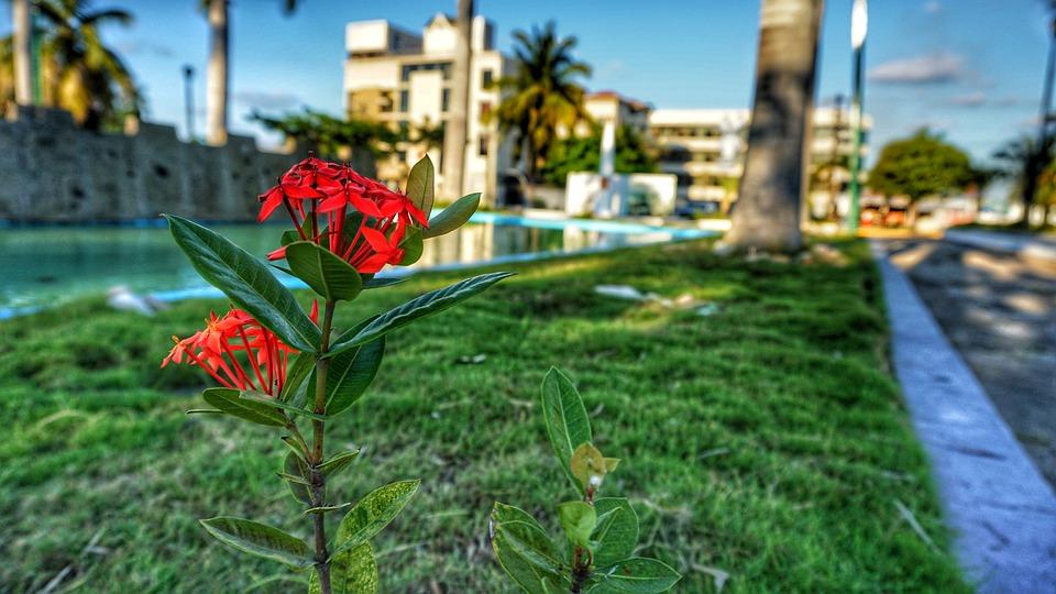 Flower, Nature, Flowers, Garden
