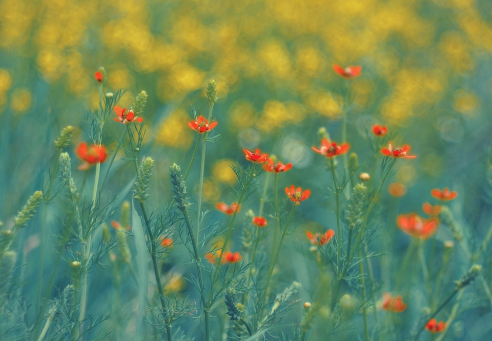 Summer, Spring, Flowers, Flower, Nature, Color, Plant