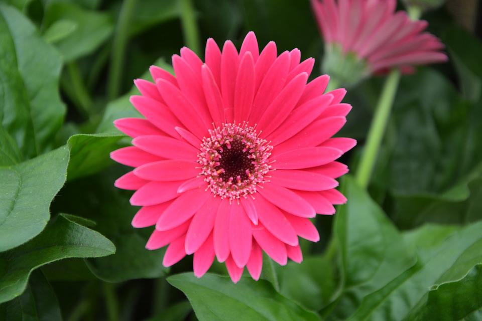 Flowers, Bright Pink, Nature, Flowering, Plants, Garden