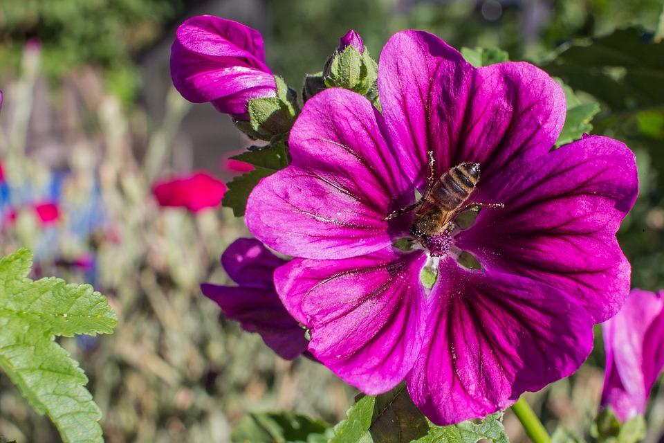 Nature, Flower, Plant, Garden, Summer, Flowers, Color