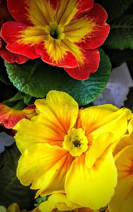 Flowers, Nature, Leaf