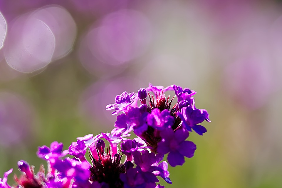 Flowers, Summer, Spring, Plant, Nature, Pink, Close Up