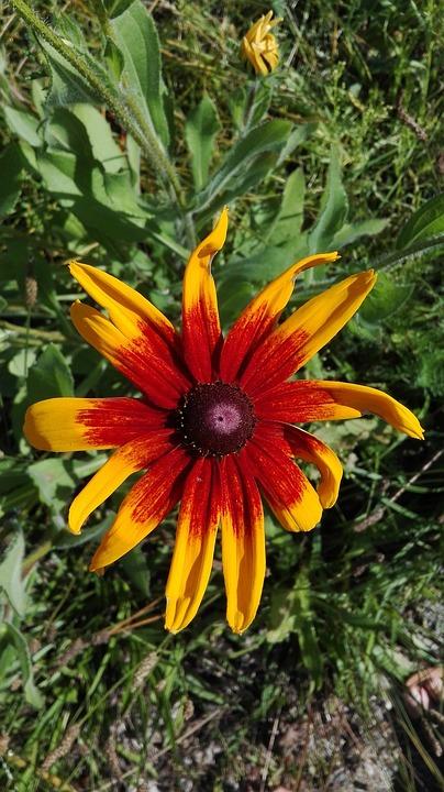 Flowers, Nature, Plants, Summer August