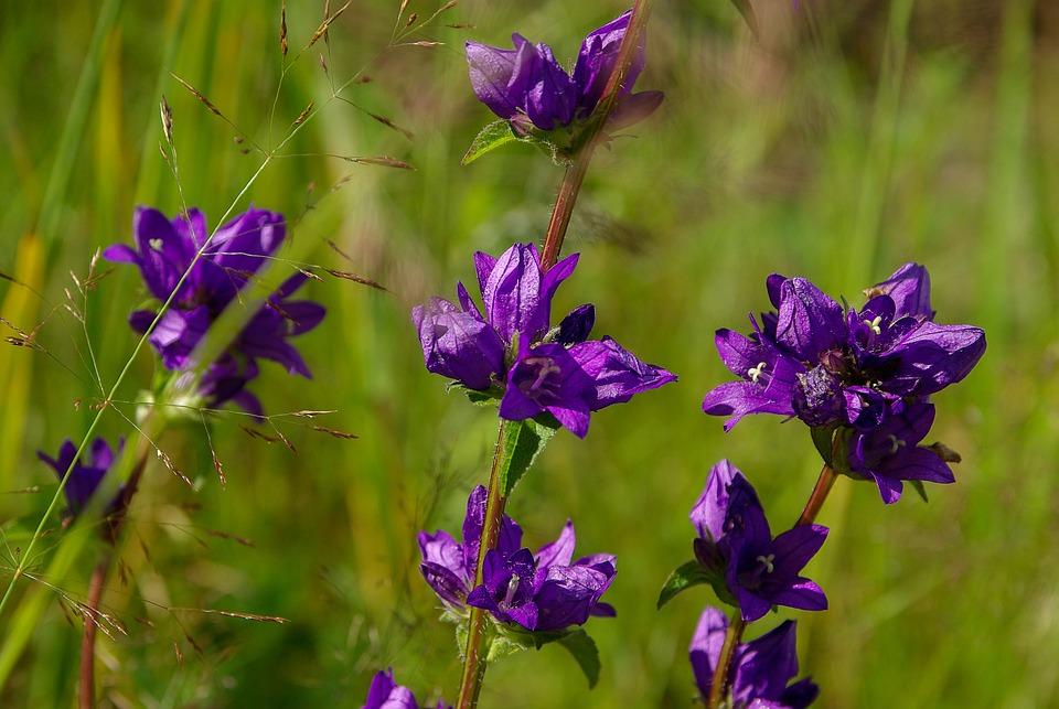 Flowers, Violet, Nature