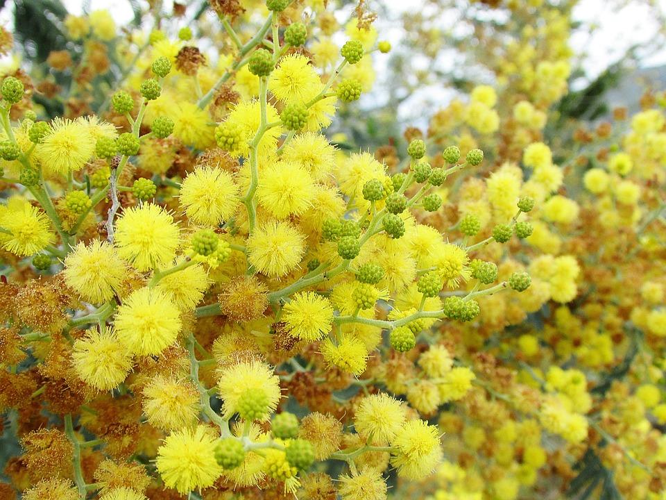 Flowers, Yellow, Nature