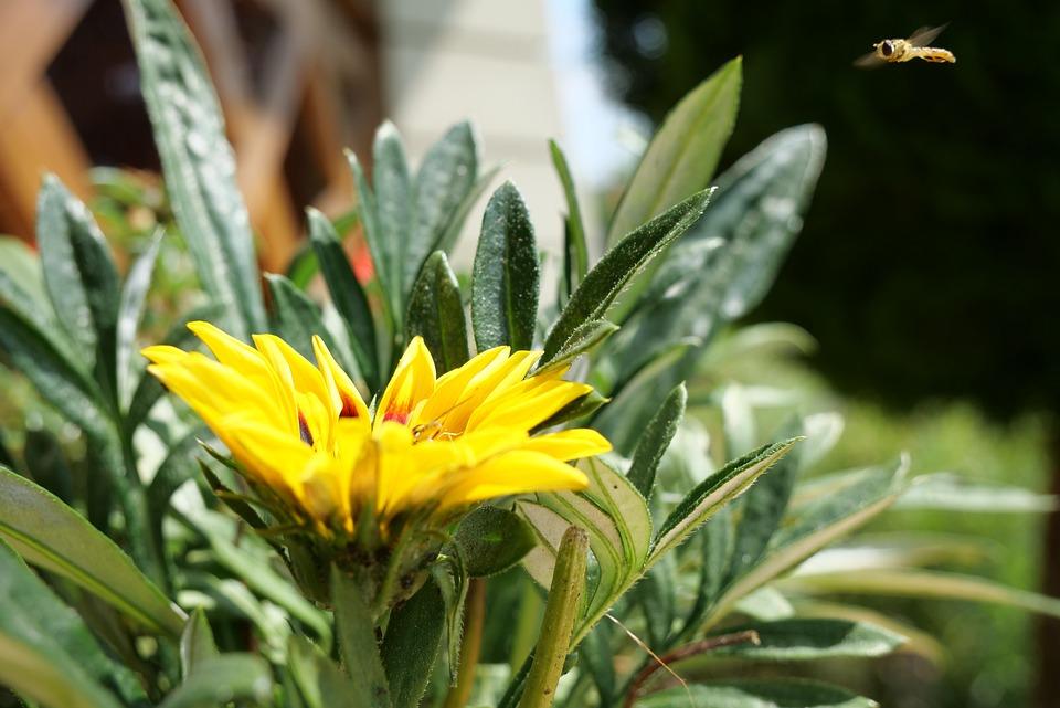 Flower, Garden, Spring, Flowers, Nature, Yellow