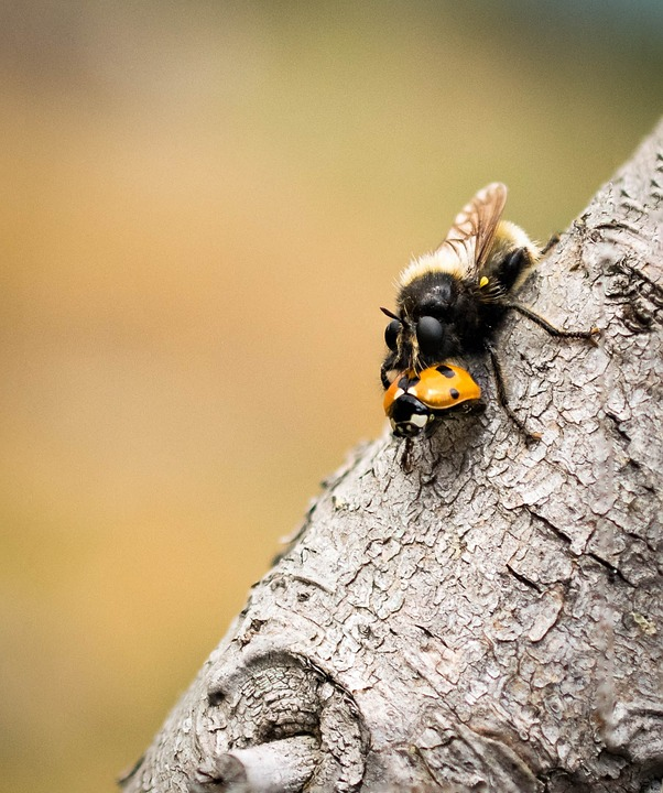 Fly, Nature, Animal, Insect, Macro