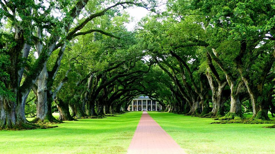 Louisiana, Trees, Allee, Green, Prairie, Nature, Foam