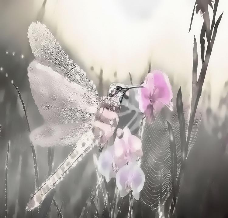 Fantasy, Hummingbird, Dragonfly, Nature, Fog, Insect