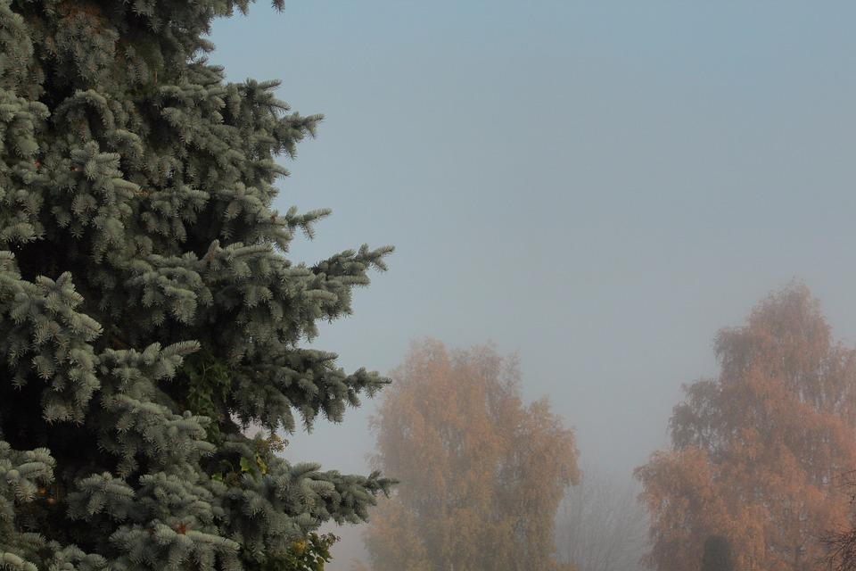 Autumn, Leaves, Gold, Red, Wood, Log, Nature, Fog