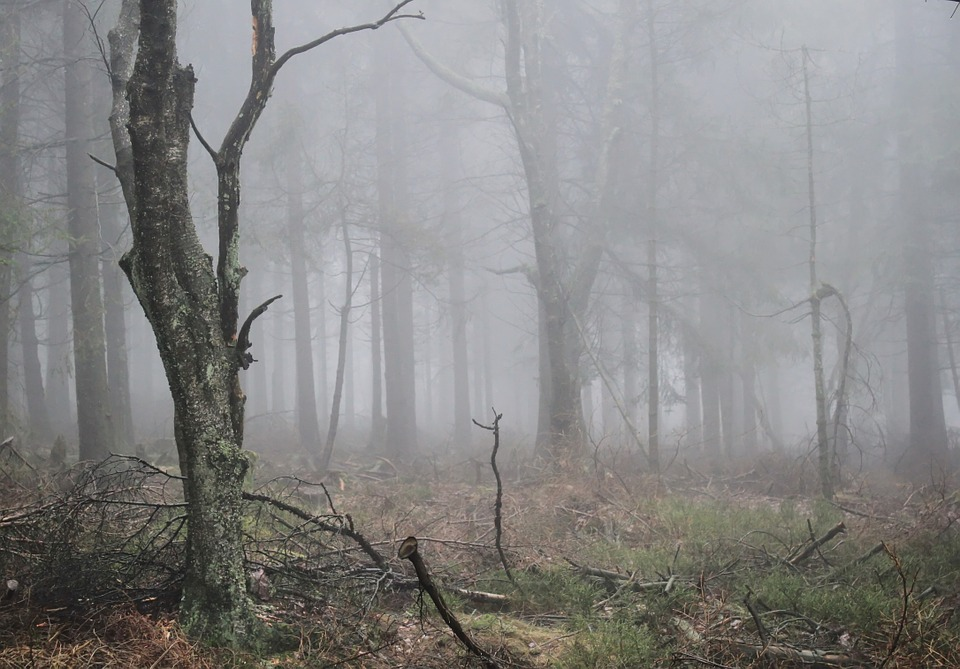 Fog, Autumn, Forest, Nature, Plant, Atmosphere, Mood