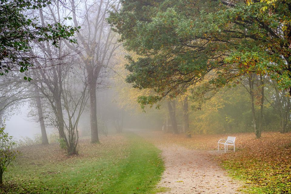 Away, Fog, Morning, Nature, Landscape, Mood, Forest