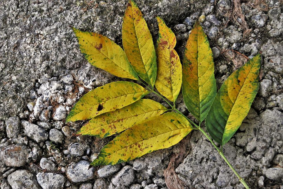 Yellow, Foliage, In The Fall, Nature, Collapse, Leaf