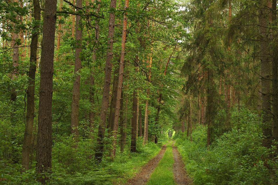 Forest, Green, Light, Nature, Landscape, Tree, Foliage